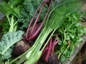 Oogst uit eigen tuin, foto: roosgoesgreen