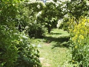 Forest Garden M. Crawford