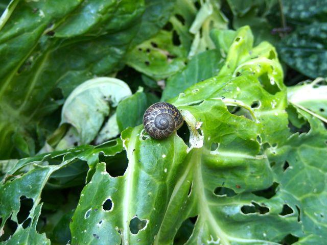 Koffiedik In Tuin : Koffiedik vriend in de tuin en op je huid roos goes green